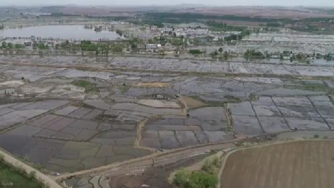 黑龍江寧安:石板大米産區水稻插秧即將結束