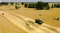 全國大規模小麥跨區機收全面展開
