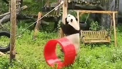 """""""功夫熊貓""""在線營業 遊樂園裏顯身手"""