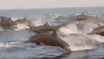 墨西哥:旅遊勝地遊客船只減少 海豚群場面壯觀