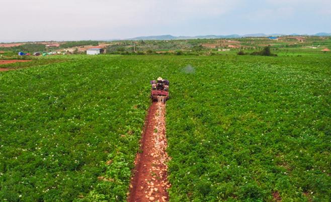 瞰夏收 | 雲南陸良萬畝土豆喜豐收