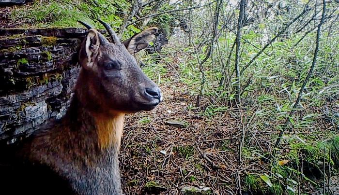 十多種野生動物現身萬朝山自然保護區
