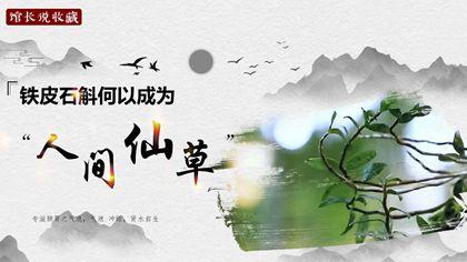 """館長説收藏丨鐵皮石斛何以成為""""人間仙草""""?"""