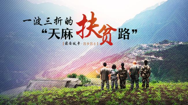 """【微紀錄·雲南故事】一波三折的""""天麻扶貧路"""""""