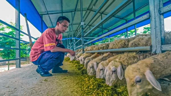 """脫貧致富正當時 90後大學生返鄉當""""羊倌"""""""