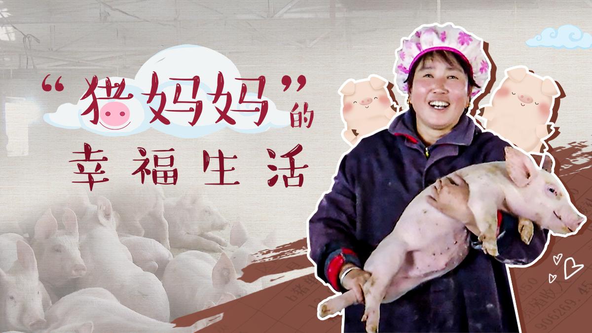 """【脫貧印記】""""豬媽媽""""的幸福生活"""