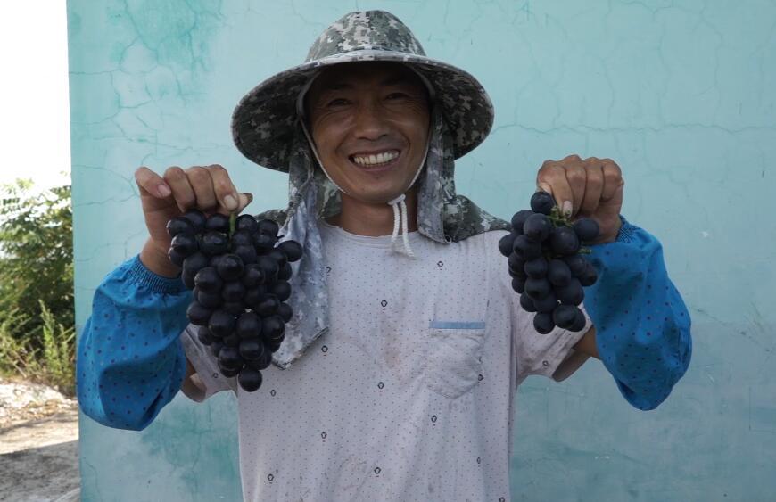 葡萄豐收香滿園 村民致富笑開顏