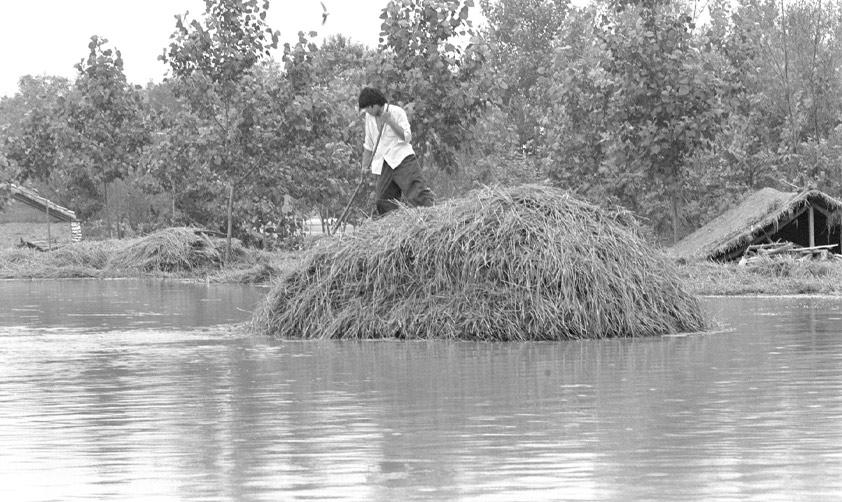 1992年3月 安徽農民冒著危險力圖保住麥子新華社記者 張曙光攝