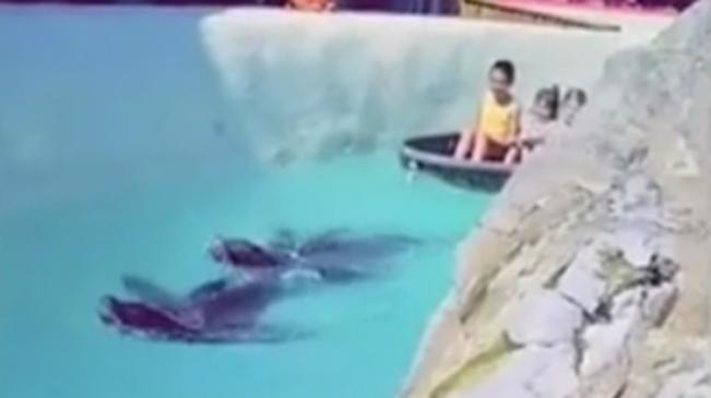 """""""被迫營業"""" 比利時動物園海豹拉船取悅遊客遭批"""