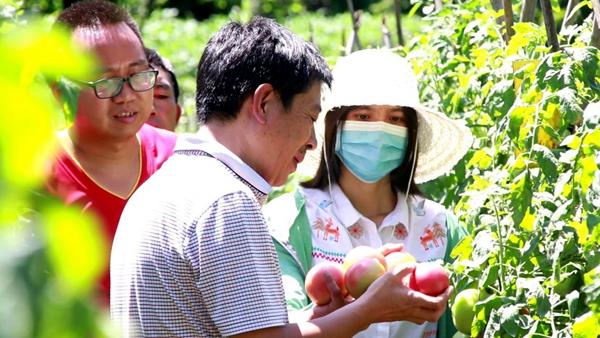 湖北南漳:高山有機蔬菜園了山民致富夢