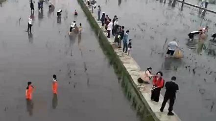 四川丹棱:齊捉稻花魚 感受豐收的喜悅