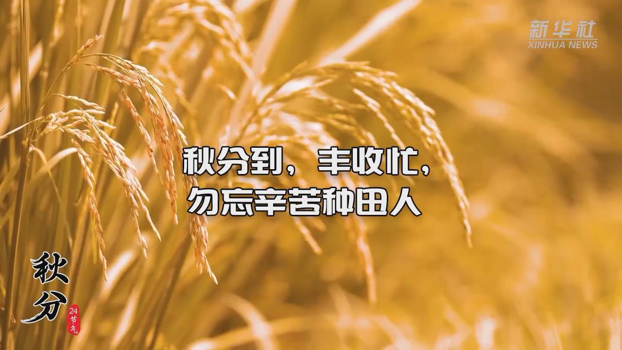 秋分到,豐收忙,勿忘辛苦種田人