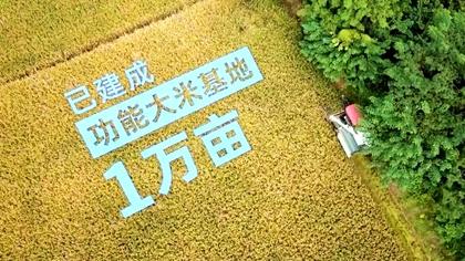 四川崇州:稻田千層浪 飄來新米香