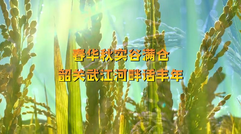 """【""""飛閱""""中國】春華秋實谷滿倉 韶關武江河畔話豐年"""