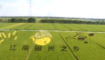 江蘇蘇州:觀賞多彩稻畫 體驗豐收美景