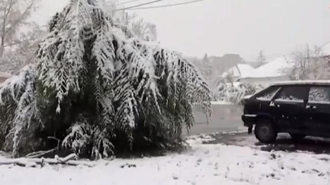 入冬!西伯利亞迎來第一場大雪
