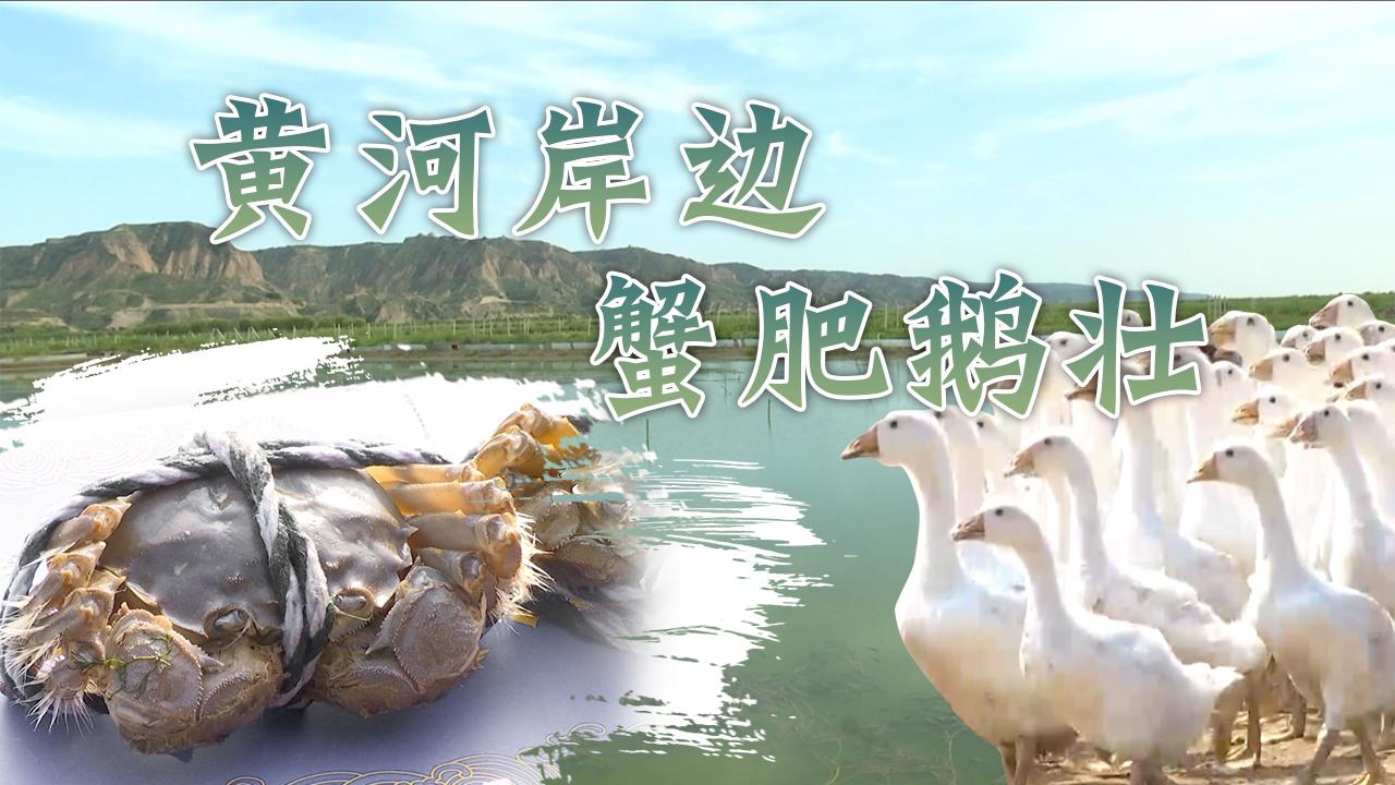黃河岸邊蟹肥鵝壯
