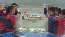 四川宜賓:28.9萬尾珍稀特有魚類放流金沙江