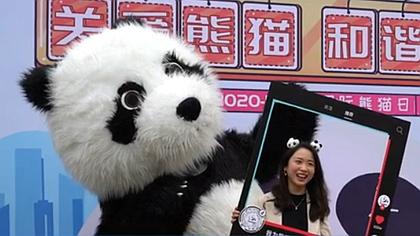 """國際熊貓日,熊貓社區叫你一起""""關愛熊貓""""!"""