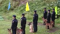 廣西:警犬實戰大練兵 模擬現場超然