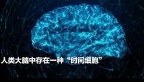 """人腦中存在神奇的""""時間細胞"""" 讓人類以正確的順序回憶往事"""