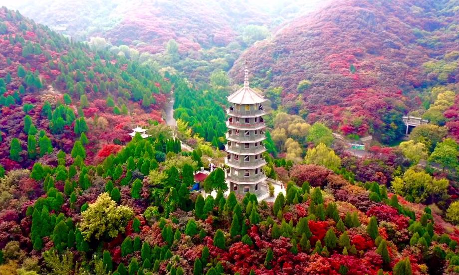 濟南紅葉谷景區:萬山紅遍 宛如一幅風景畫