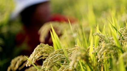 在嘉興,看見未來農業的樣子