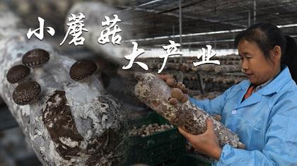 小蘑菇大産業