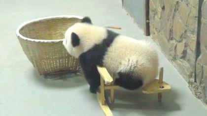 熊貓春生:新手上路,請多關照