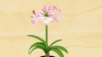 養些不怕冷的花 給你的冬天加點芬芳!