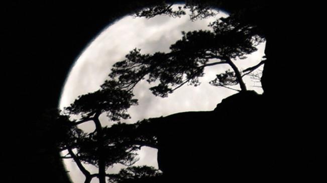 太驚艷!明月奇松 夢幻同框