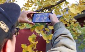 拯救你的拍照技術!五招用手機拍出唯美銀杏照