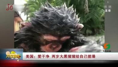 美國:愛幹凈 兩歲大黑猩猩給自己搓澡