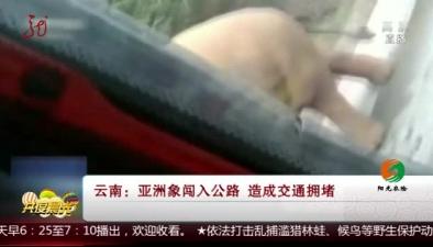 雲南:亞洲象闖入公路 造成交通擁堵