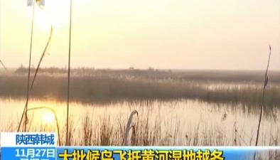 陜西韓城:大批候鳥飛抵黃河濕地越冬