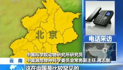 雲南:紅外相機32年來首次拍攝到狼和豺