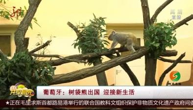 葡萄牙:樹袋熊出國 迎接新生活