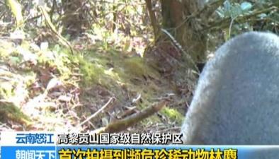 高黎貢山國家級自然保護區:首次拍攝到瀕危珍稀動物林麝