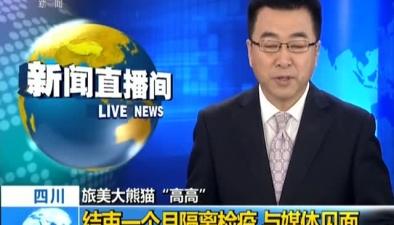 """四川:旅美大熊貓""""高高""""結束一個月隔離檢疫 與媒體見面"""
