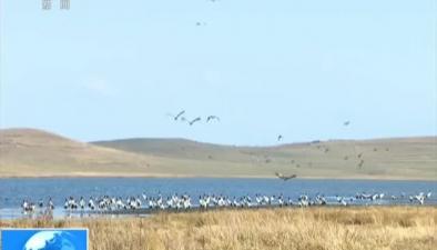 雲南:關注候鳥遷徙大山包鶴群數量比去年增14%