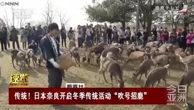 """傳統!日本奈良開啟冬季傳統活動""""吹號招鹿"""""""