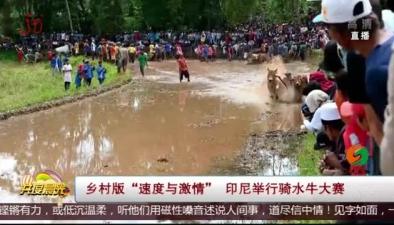 """鄉村版""""速度與激情"""" 印尼舉行騎水牛大賽"""
