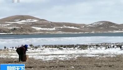 關注候鳥遷徙:大山包鶴群數量比去年增14%