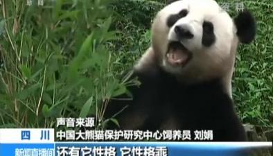 """出國大熊貓如何""""海選"""""""