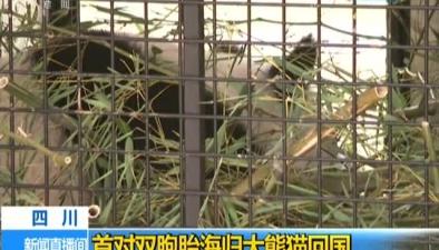 四川:首對雙胞胎海歸大熊貓回國