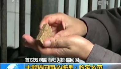 大熊貓回國必修課:吃家鄉菜