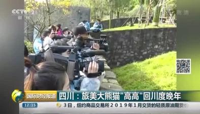 """四川:旅美大熊貓""""高高""""回川度晚年"""