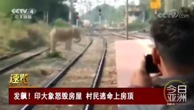 發飆!印大象怒毀房屋 村民逃命上房頂