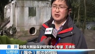 旅奧雙胞胎大熊貓回國:大熊貓回國必修課吃家鄉菜