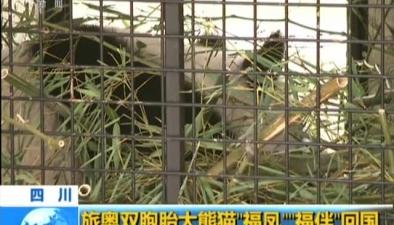 四川:旅奧雙胞胎大熊貓回國